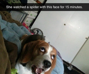 dog, funny, and spider image