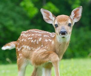 cute animals and deer image