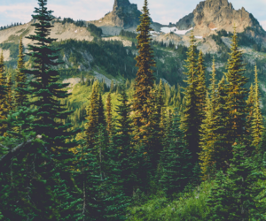 aesthetic, forest, and pastel image
