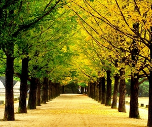 green, scenery, and yellow image