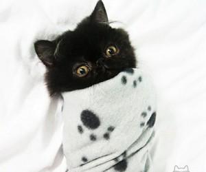 cat and bino image
