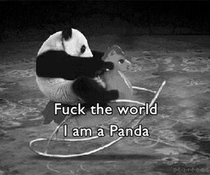 black&white, funny, and panda image