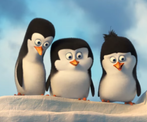 animals, Rico, and pinguins image