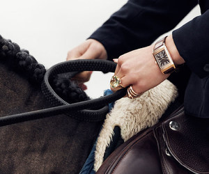 equestrian, horse, and horses image