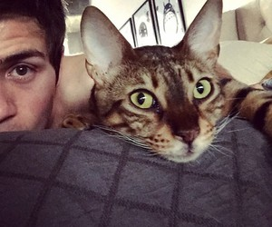 bed, cat, and youtube image