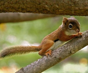 squirrel, cute, and animal image