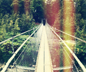 green, bridge, and forest image