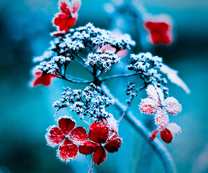 flowers, winter, and red image