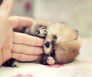 fofo, cute, and little image
