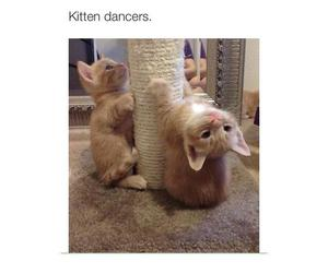 cat, dance, and love image