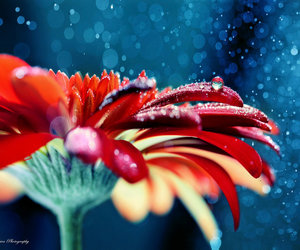 dew, flower, and love image