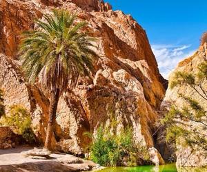 beautiful, desert, and oasis image