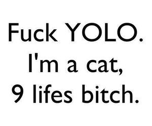 cat, fu, and yolo image