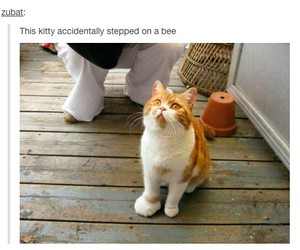 funny, bee, and cat image
