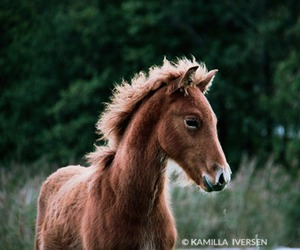adorable, equestrian, and horse image