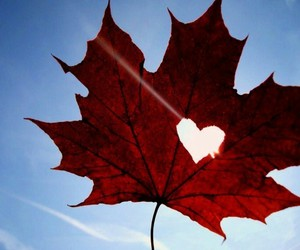 coeur and feuille image