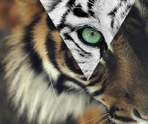 tiger and hipstet image
