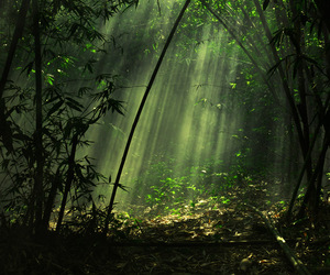 daylight, forest, and ray image
