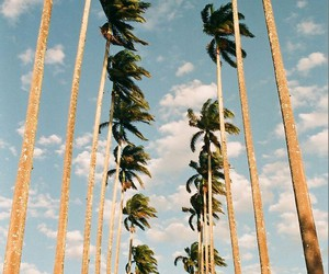 california, photo, and love image