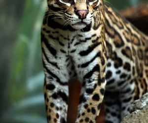 animal, wild, and cute image