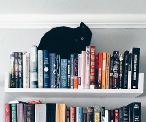 book, cat, and bookshelf image