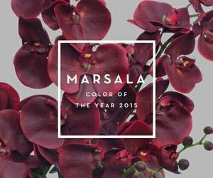 marsala, 2015, and color image