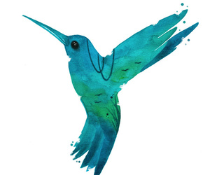blue, green, and hummingbird image
