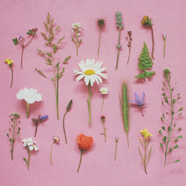 flowers, girly, and nature image