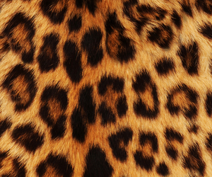 wallpaper, leopard, and background image