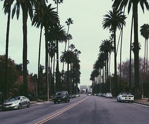 palm trees, la, and car image
