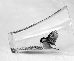 glass, hummingbird, and cute image