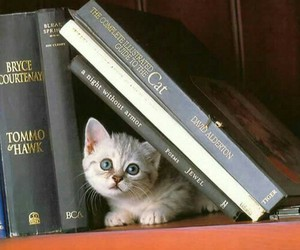 books, cute, and kitten image