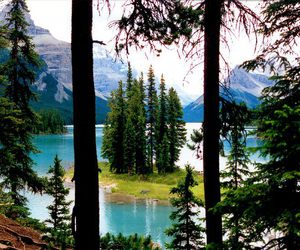 beautiful, trees, and mountain image
