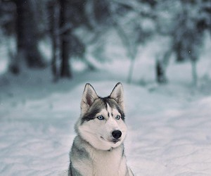 dog, animal, and snow image