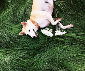 dog, happy, and flowers image