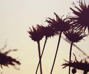feeling, flowers, and like image