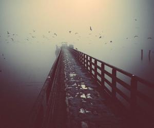 bird, lake, and photography image