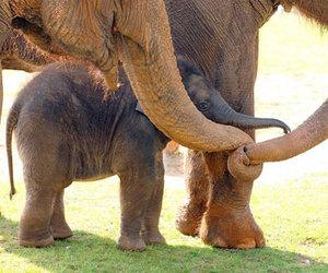 love, animals, and elephant image