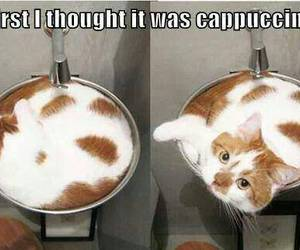 cat, cute, and cappuccino image