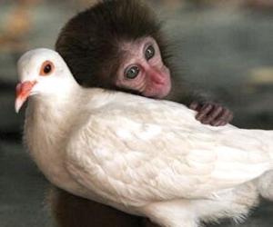 monkey, animal, and bird image