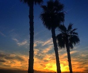 beach, california, and palm trees image
