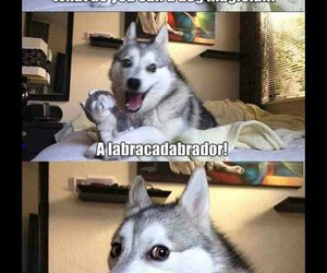 funny, dog, and joke image