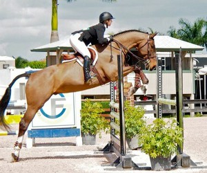 equestrian, hirse, and jumper image