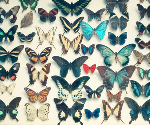 butterfly, blue, and animal image