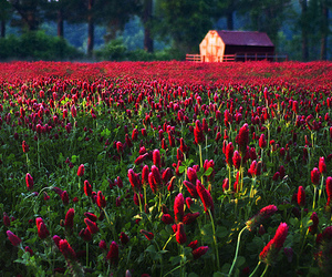 flowers, nice, and pretty image