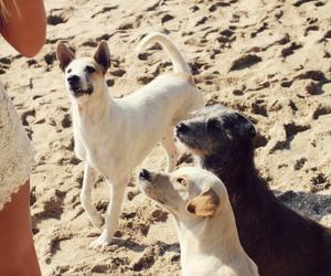 beach, blogger, and dog image