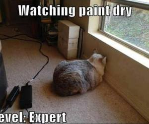 cat, funny, and expert image