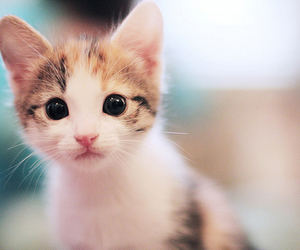 adorable, kittens, and cat image