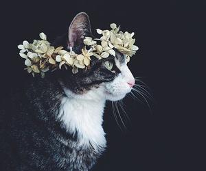 animal, boho, and style image