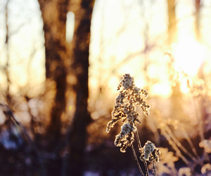 frosty, lovely light, and winter morning image